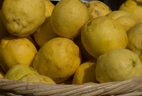 Citrus x limon eureka